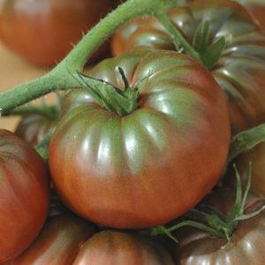 tomate-noire-de-crimee-