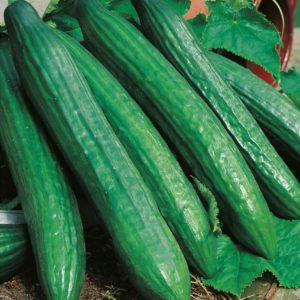 vert-long-maraicher